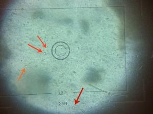 apricotprotozoa