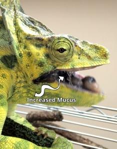increasedmucus